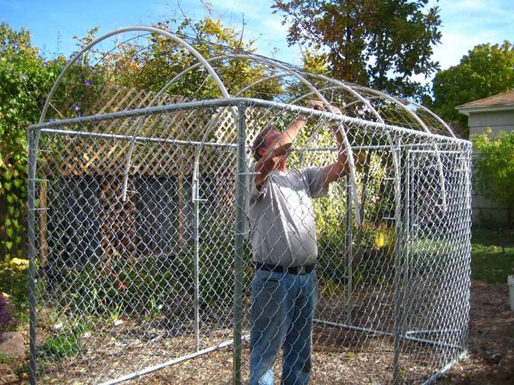 Greenhouses forum: My Dog Kennel Greenhouse! (All Things Plants)