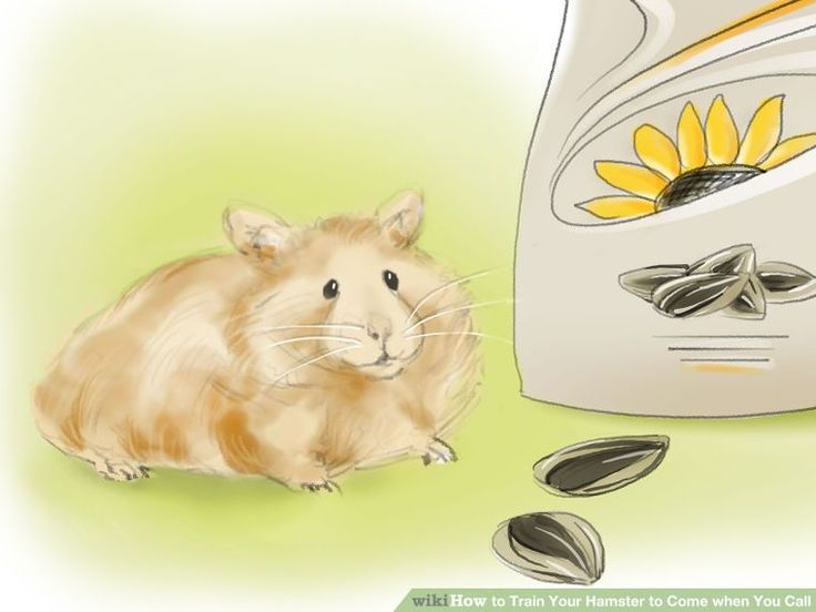 Train Your Hamster To Come When You Call Hamster Furry Friend Animals