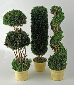 Preserved Topiaries 14in (Set of 3)