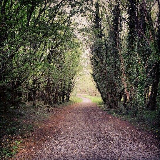 Walk through the trees