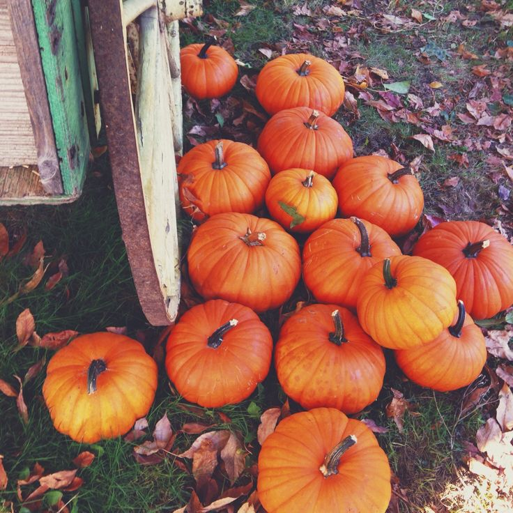 """midwestern-darling: """" I love going to get pumpkins. I'm glad I finally found a little bit of time in my crazy schedule to go pick a few out. """""""