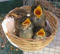 Rainbow Wildlife Rescue and Wildlife Rehabilitation in Texas #non #profit #wildlife #rescue, #wildlife #rehabilitation, #wildlife #rescue, #raccoon #rescue, #squirrel #rescue, #orphaned #animal, #wild #animal, #orphaned #raccoon, #orphaned #squirrel, #orphaned #bird, #orphaned #rabbit, #orphaned #bunny, #orphaned #opossum, #baby #bird, #squirrel #baby, #baby #squirrel, #rabbit #baby, #baby #rabbit, #baby #bunny, #bunny #baby, #opossum #baby, #baby #opossum, #squirrel #rescue, #bird #rescue…