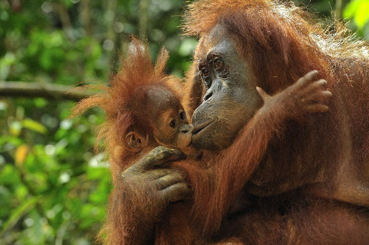 http://www.komodoecotours.com/tours--borneo-/orangutan-bamboo-rafting-4d-3n