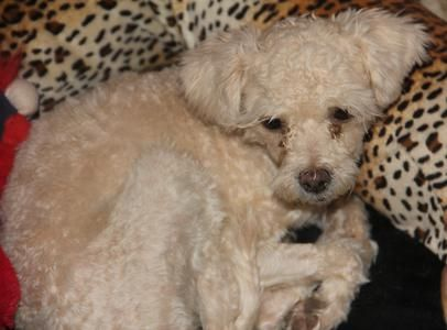 Vj Ranch - Rescue Dogs For Adoption, Small Dogs For Adoption, Dog Adoption Websites