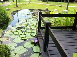 Water Lily Fish Pond