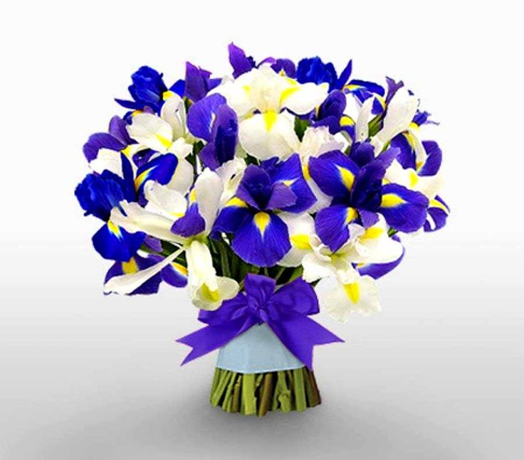 Irises, a less expensive but distinctive flower to use for a Spring wedding