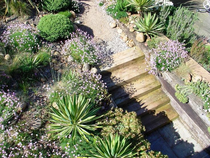 wonderful coastal garden at the lookout lympstone open each year as part of the ngs open garden scheme - Garden Ideas 2014 Uk