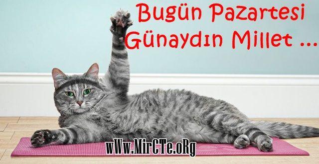 mircte.org , pazartesi sözleri , kedi resimleri , yazılı kedi resimleri , bugün pazartesi , mircte.net