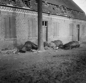 THE FIRST BATTLE OF YPRES, OCTOBER-NOVEMBER 1914 (Q 57216)