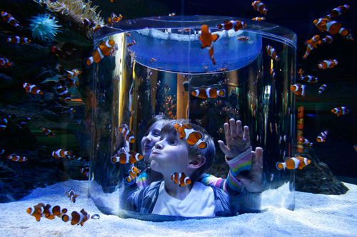Plan a visit to the Two Oceans Aquarium at the V Waterfront. Fun for adults and children. The Two Ocean Aquarium showcases the incredible diversity of marine life found in the Indian and Atlantic oceans. Over 3000 living sea animals, including sharks, fishes, turtles and penguins can be seen in this spectacular underwater nature reserve. www.aquarium.co.za