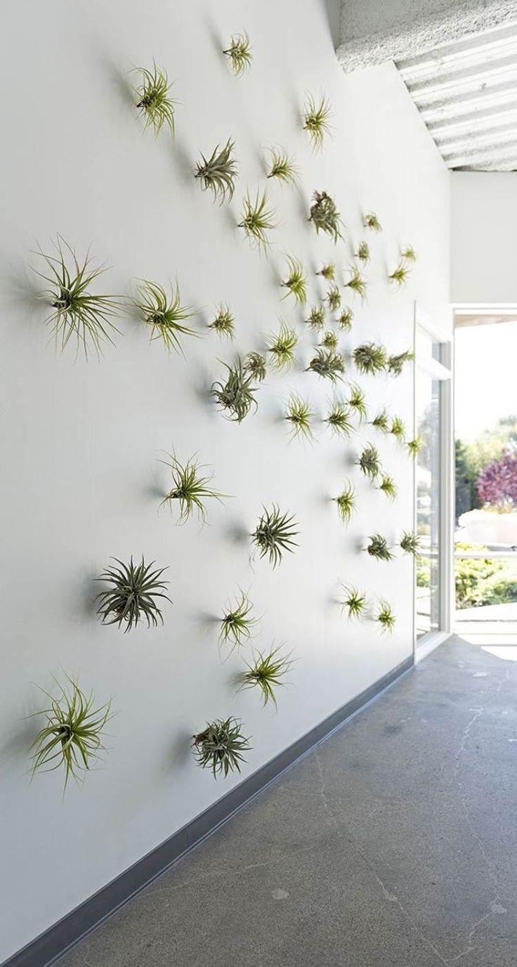 Wanddekoration mit pflanzlichem Charakter - mit Tillandsien