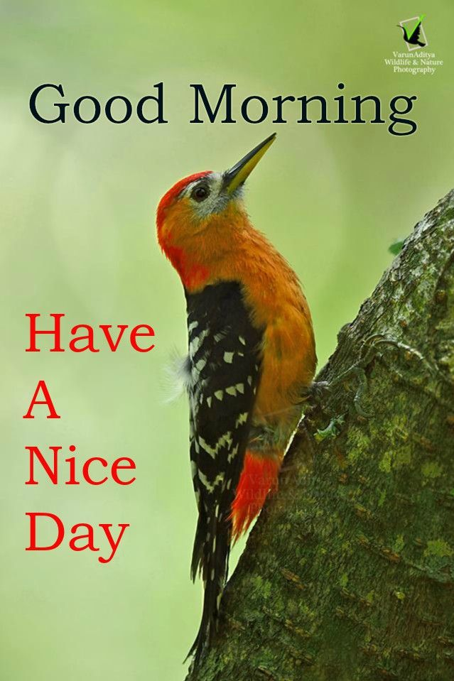Best Good Morning Wishes With Bird Images Good Morning Images Good Morning Flowers Good Morning Picture