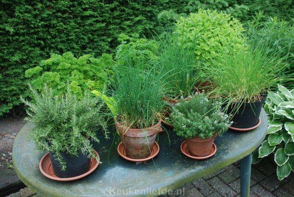 Er gaat niets boven vers geplukte tuinkruiden uit eigen tuin om je gerechten mee op smaak te brengen. Bovendien beleef je aan je eigen kruiden veel langer