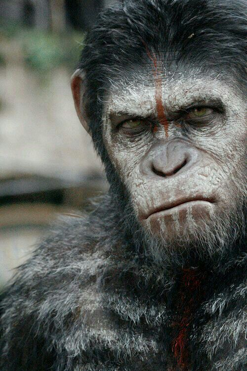 Ceasar - Dawn of The Planet of The Apes