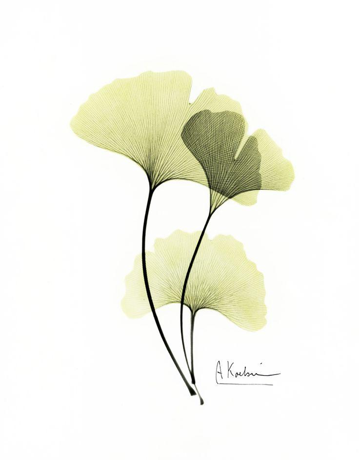 Albert Koetsier (x-rayographs)  http://susanspiritusgallery.com/artist/albert-koetsier/hand-painted-x-rays/ginkgo-2/