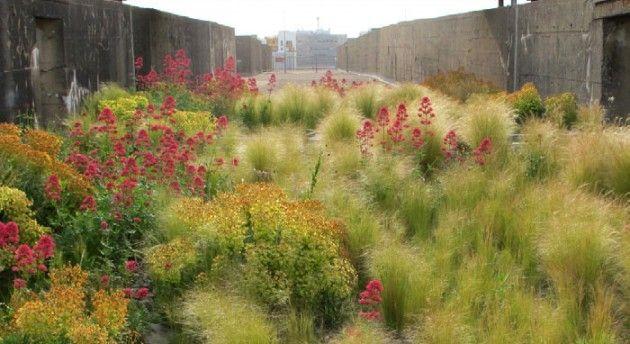Le jardin des orpins, St Nazaire