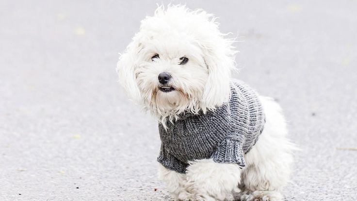 Sticka värmande tröja till hunden