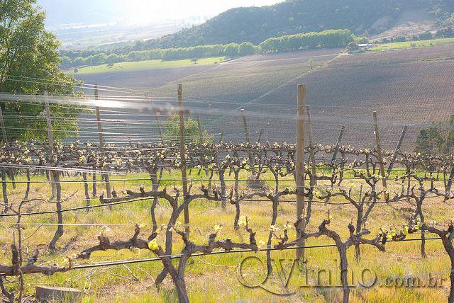 Apalta - Viña Ventisquero | Flickr – Compartilhamento de fotos!