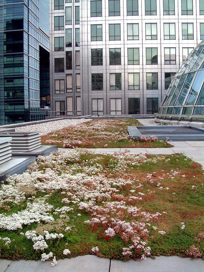 Figure 1. Retail sedum roof, Canary Wharf, London pinned by @dakwaarde