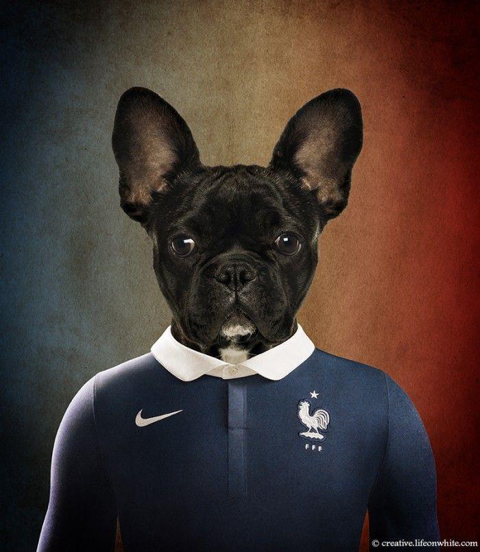 Un artiste a créé des portraits de chiens habillés avec les maillots de football des équipes participant à la coupe du monde 2014. C'est bien sûr un bulledog français qui porte le maillot de la France. Cliquez pour découvrir les autres.
