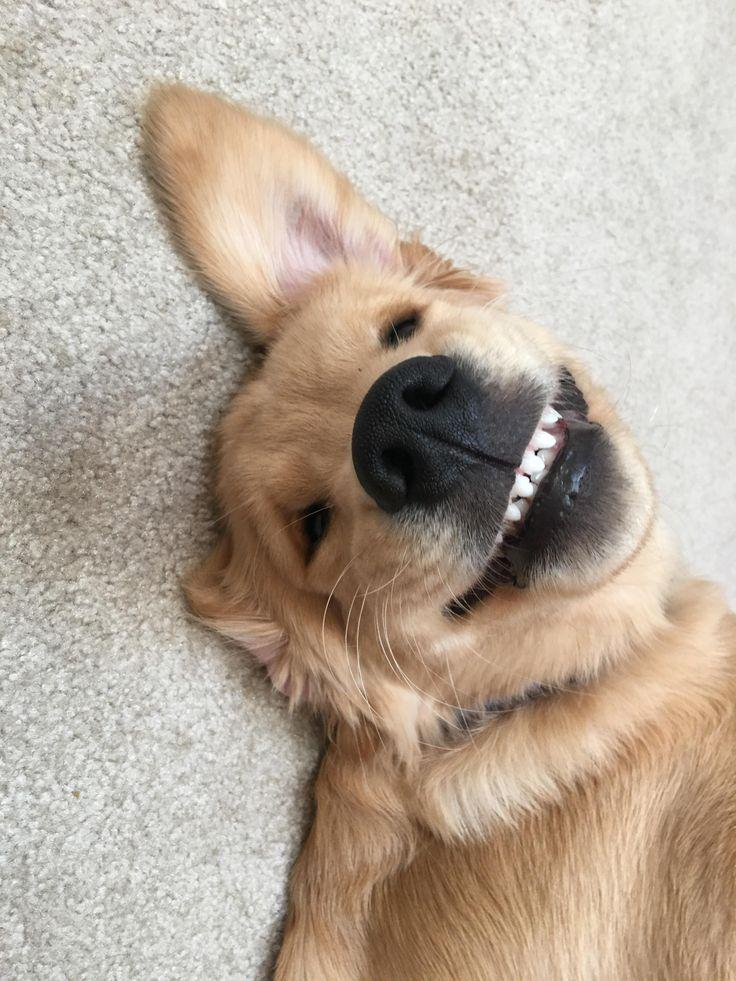 Winston's toothy cheesin' smile. http://ift.tt/2dccqjP