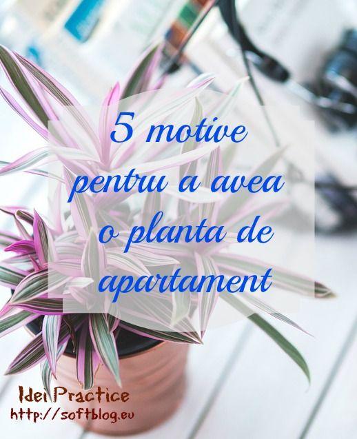 5 motive pentru a avea o planta de apartament