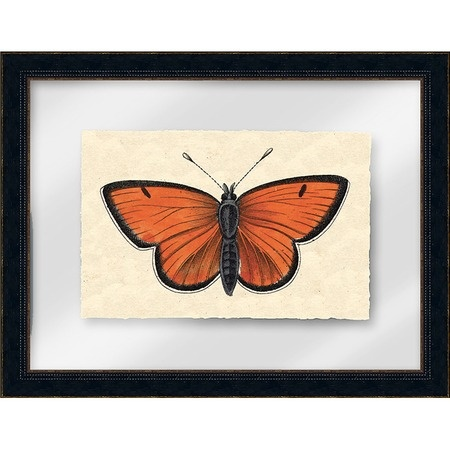 i pinned this petit papillon framed wall art i from the. Black Bedroom Furniture Sets. Home Design Ideas