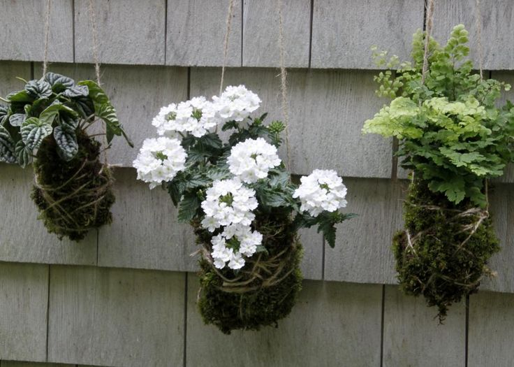 Learn the art of kokedama and add a string garden to your indoor or outdoor living space.