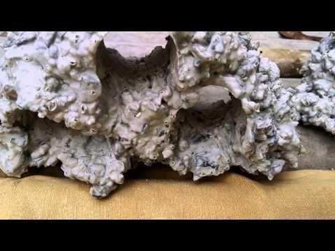 Fazendo pedras para aquarios . são usados na maioria das vezes em aquários de ciclídeos africanos.( lembrando deixe de molho dura te 20 a30 dias e trocando a...