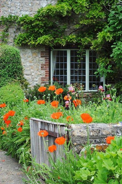 cottage garden - poppies