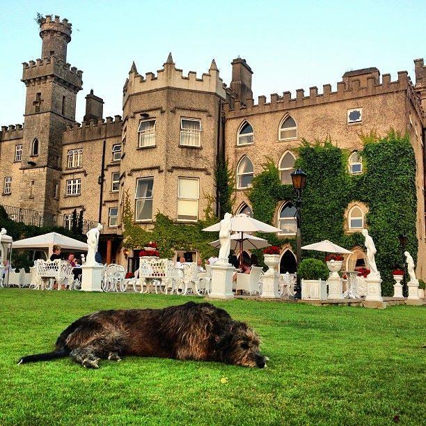 Have You Met Oscar The Irish Wolfhound At Cabra Castle Near Kingscourt Co Cavan
