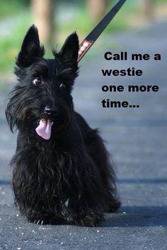 I'm a Scottie, not a Westie!