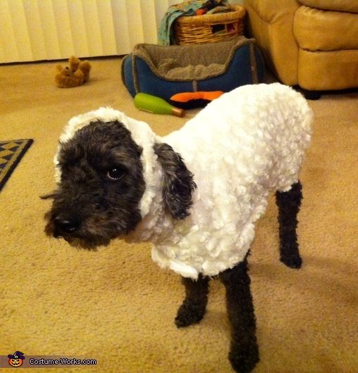 This homemade costume for pets entered our 2013 Halloween Costume Contest.