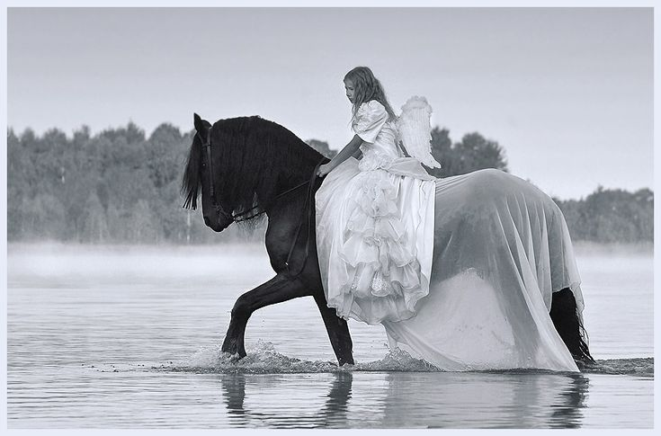1000+ Images About Friesian Horses And Other Favorite