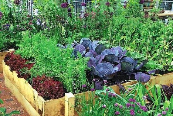 20 растений для защиты вашего огорода. Совместные посадки