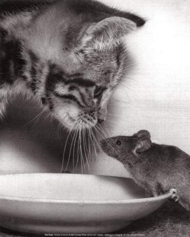 Chaton et Souris by Paul Kaye Item - #cat
