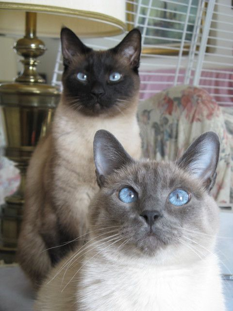 cat collars id tags