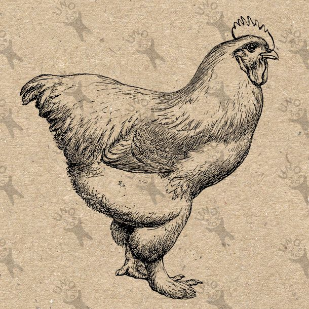 Antique image Hen Chicken Instant Download Digital printable vintage picture clipart graphic scrapbooking, burlap, decor  etc HQ 300dpi by UnoPrint on Etsy