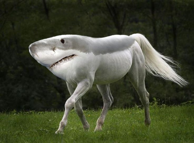 I am a nice shorse, not a mindless eating machine. If I am to change this image, I must first change myself. Foats (fish-oats) are friends, not food. Except unicorns!