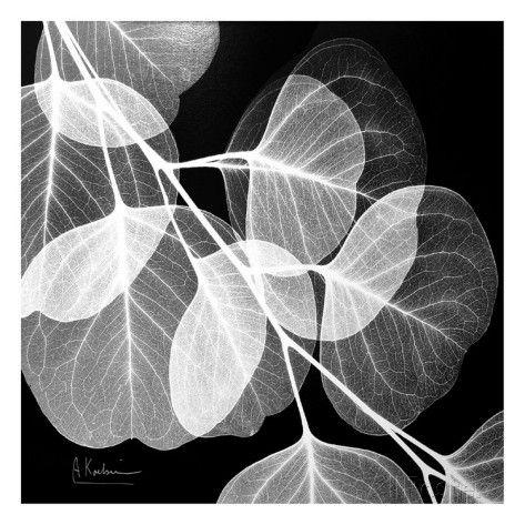 black and white drawing | Eucalyptus Black and White Art Print