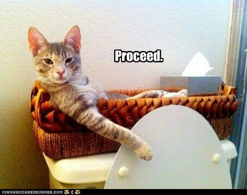 Proceed.: Funny Pictures, Funny Cat, Proceed, Toilets Paper, Funnycat, Funny Stuff, Funny Animal, Bathroom, Hilarious Sayings