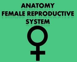 Female Reproductive Anatomy Notes Powerpoint Presentations