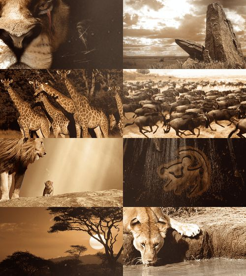 17 best images about the lion king on pinterest