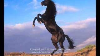 video di cavalli selvaggi - YouTube