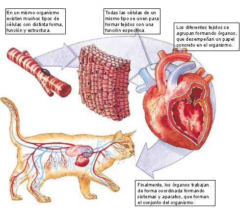 Gabi es lo mejor que te encontr del sistema circulatorio for En k parte del cuerpo estan los rinones