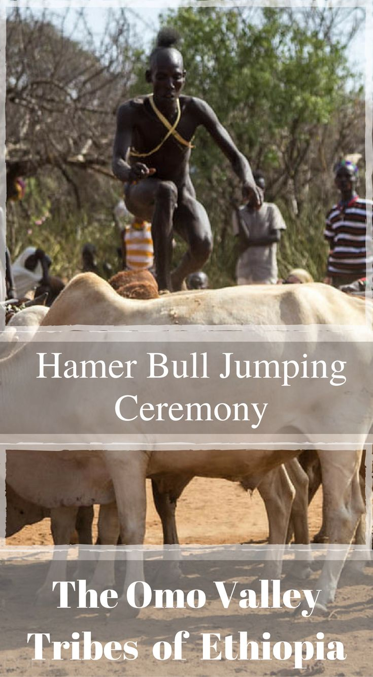 Hamer Bull Jumping Ceremony, The Omo Valley Tribes of Ethiopia. The task for the boy involved jumping onto the back of these bulls and  running across them without falling, 4 times in total before he can  officially become a man. This is something you cannot miss when visiting Ethiopia, Africa. Click to read the full travel blog post Our Visit to the Omo Valley Tribes of Ethiopia