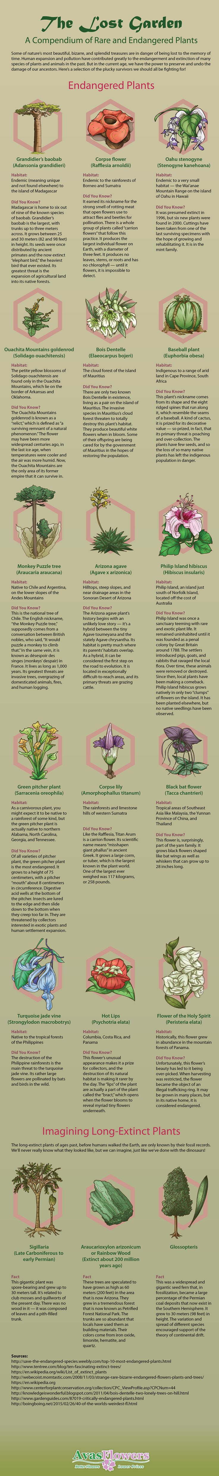 The Lost Garden: A Compendium of Rare and Endangered Plants #Infographic #Flowers #Plants