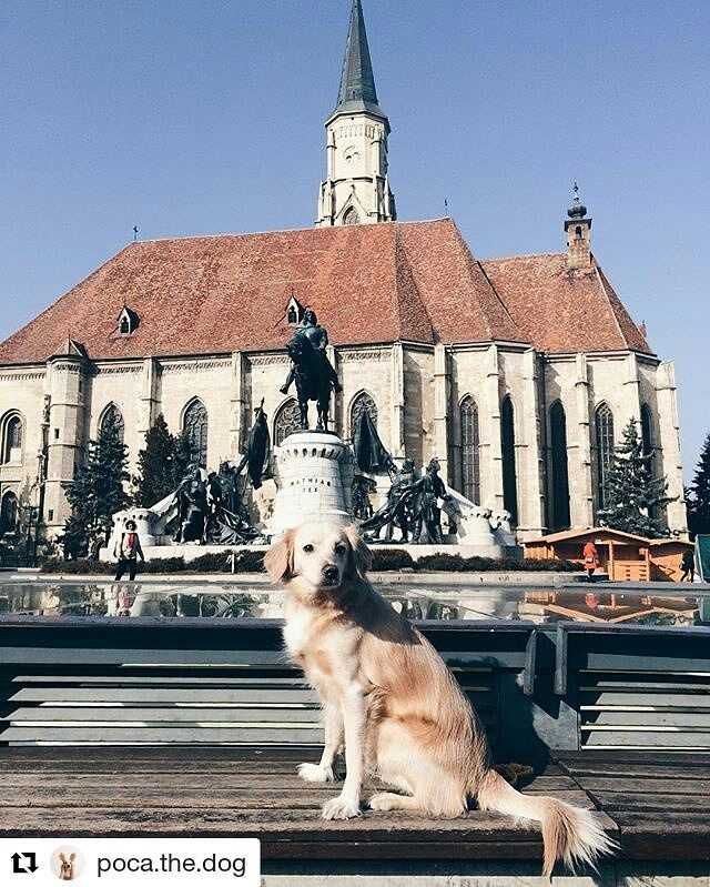 #repost from @poca.the.dog  #servusfromcluj #view #unionsquare #dog #church #architecture #statue #winter #cluj #clujnapoca #clujview #city #insidecluj #clujlife #viataincluj #clujulmagic #visitcluj #vsco #vscocam #vscoromania #ig_romania #igersromania #travel #ig_cluj #instatravel #travelgram #transilvania #transylvania #travel #tourism #travelgram #meetingprofs #eventprofs #meeting #planner #events #eventplanner #popular #trending #micefx [Visit www.micefx.com for more...]