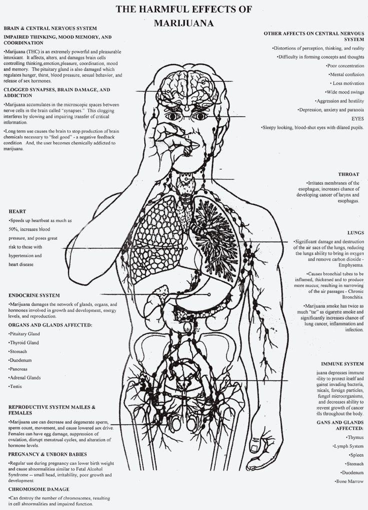 Harmful effects of marijuana  (say no to drugs, folks)