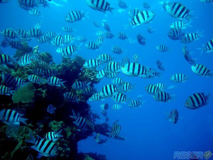 En vy av Bahamas vackra koraller och dess tropiska fiskar i havet.
